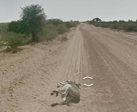 Google Street View Donkey Killing